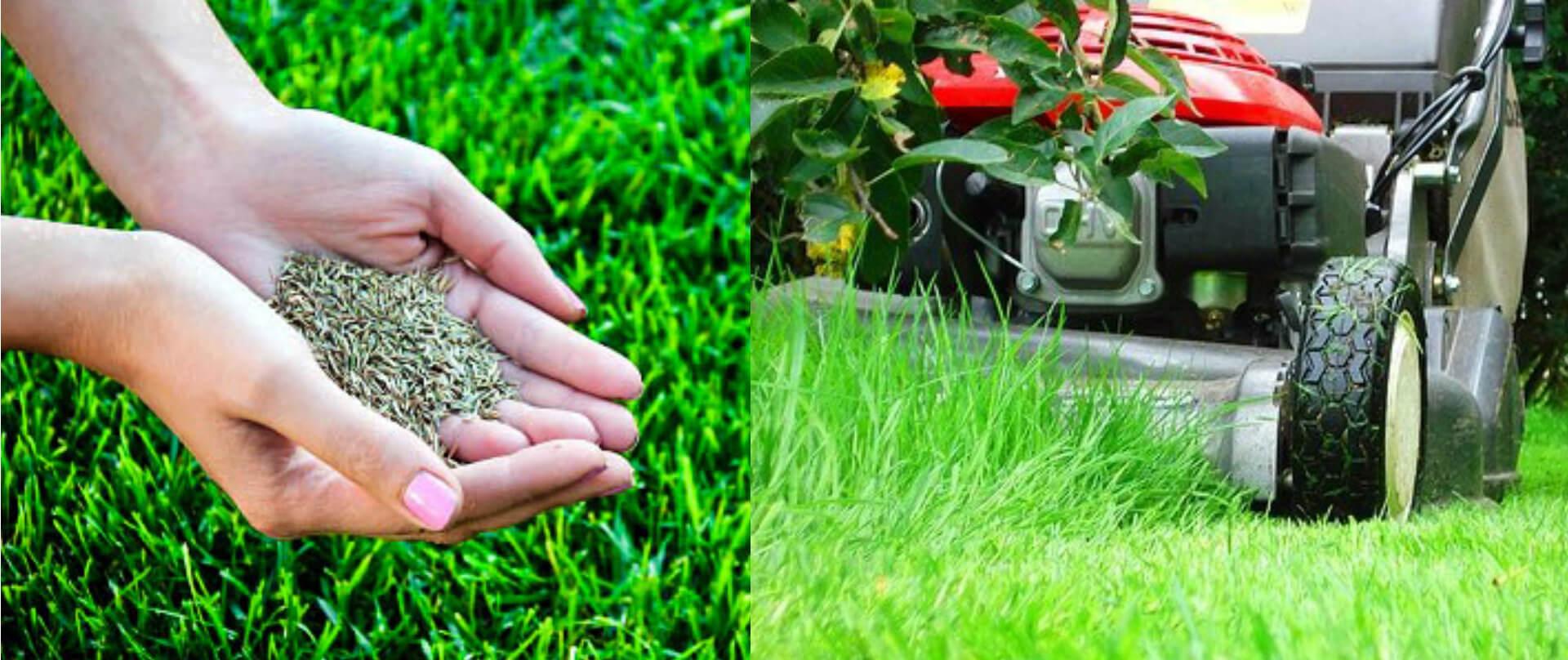 Как правильно посеять и посадить газон на даче своими руками 56
